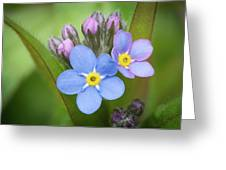 The First Blossom Of The Forget Me Not Greeting Card