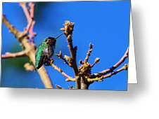 The First Hummingbird Greeting Card