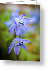The First Spring Flowers Greeting Card