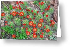 The First Week Of May, Claret Cup Cacti Begin To Bloom Throughout The Colorado Rockies.  Greeting Card