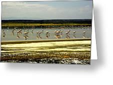 The Flamingoes Greeting Card