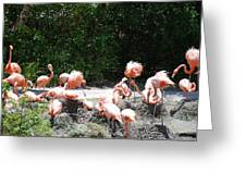 The Flamingos Greeting Card
