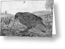 The Fledgling Greeting Card