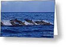 The Flight Of The Spinner Dolphin Greeting Card