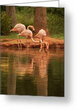 The Flock - The Serenity Of Flamingos At Water's Edge Greeting Card