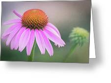The Flower At Mattamuskeet Greeting Card by Cindy Lark Hartman