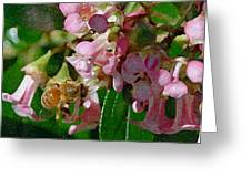 The Flower Bee Greeting Card