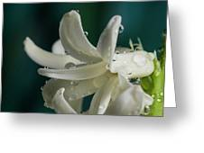 The Flower Of Dews 2 Greeting Card