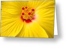 The Flowers Eyes-debbie-may Greeting Card