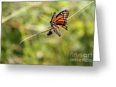The Flutterby Greeting Card