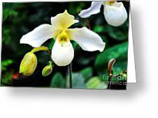The Flying Orchid Greeting Card