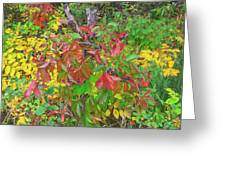 The Foliage That Seems To Be Almost Sentient  Greeting Card