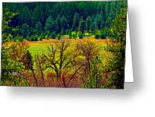 The Forest Echoes With Laughter Greeting Card