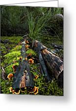 The Forest Floor Greeting Card