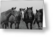 The Four Horses Greeting Card