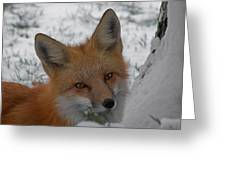 The Fox 4 Greeting Card