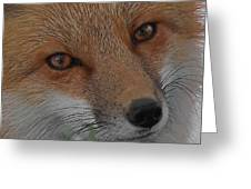 The Fox 4 Upclose Greeting Card