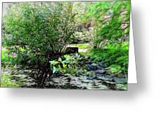The Frog Pond Greeting Card