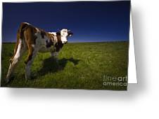 The Funny Cow Greeting Card