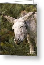 the Funny Donkey Greeting Card