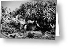 The Gardens Greeting Card by Douglas Barnard