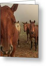 The Gauntlet - Horses Greeting Card