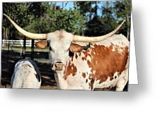 The Gazing Steer Greeting Card