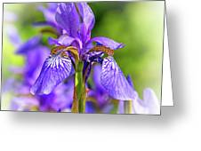 The Gentleness Of Spring 5 - Vignette Greeting Card