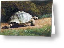 The Giant Tortoise Is Walking Greeting Card