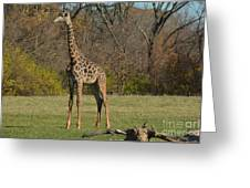 The Giraffe Greeting Card