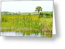 The Glades Greeting Card