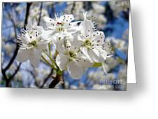 The Glory Of Spring Greeting Card