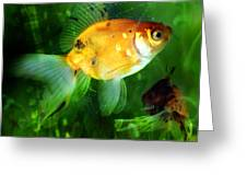 The Goldfish Greeting Card