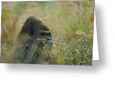 The Gorilla 5 Greeting Card