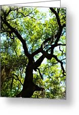 The Grace Of A Lonely Tree Greeting Card