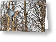 The Graceful Mourning Dove In-flight Greeting Card