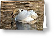 The Graceful Swan  Greeting Card