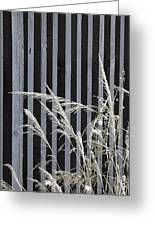 The Grass And Fence Greeting Card
