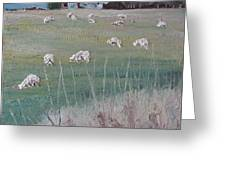 The Grazing Sheep Greeting Card