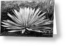 The Great Agave Greeting Card