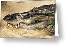 The Great Alligator Greeting Card