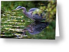 The Great Blue Heron Hunting For Food Greeting Card