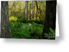 The Great Corkscrew Swamp Greeting Card