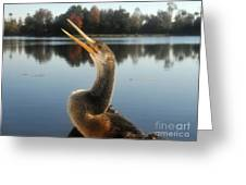 The Great Golden Crested Anhinga Greeting Card