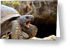 The Great Gopher Tortoise Greeting Card