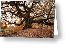 The Great Oak Greeting Card