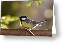 The Great Tit   Greeting Card