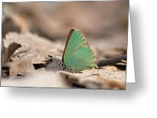The Green Hairstreak Greeting Card