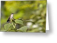 The Green Hummingbird Greeting Card