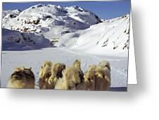 The Greenlandic Road Greeting Card